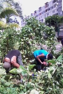 apprenez a jardiner