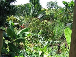 jardin-creole-01.